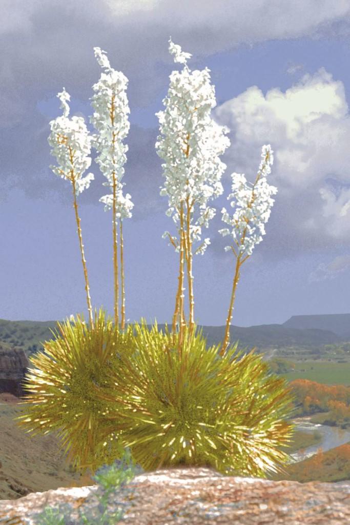Soapwort yucca. Photo courtesy of NM State Secretary.
