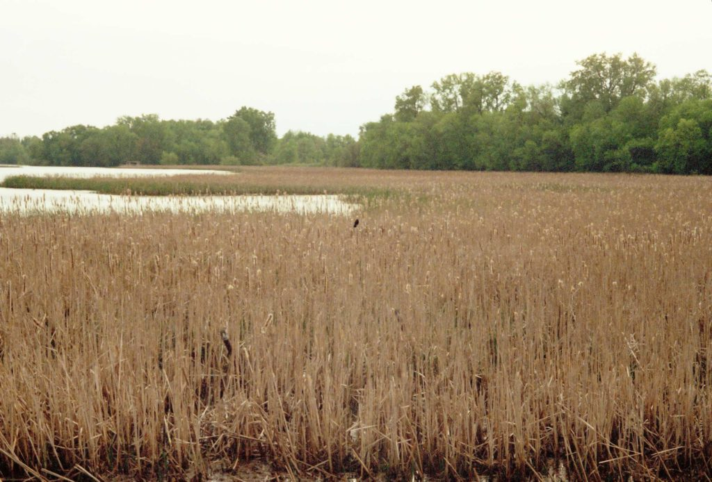 Guckenberg-Sturm marsh which is part of the 16 acres which makes up the WILD Center site.