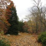 The Arboretum features collections of native plants and cultivars.