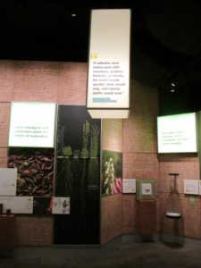 Display in The Field Museum in Chicago featuring Lorrie Otto, on whose philosophy about natural landscaping Wild Ones: Native Plants, Natural Landscapes was founded.