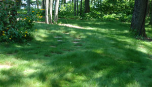 There are a number of no-mow lawn seed mixes available today. They are typically made up of a blend of fescues which creates a lush green carpet of grass that grows in full sun or partial shade -- a more sustainable lawn. Mowed once a month, a no mow lawn leads to a quieter, healthier environment.