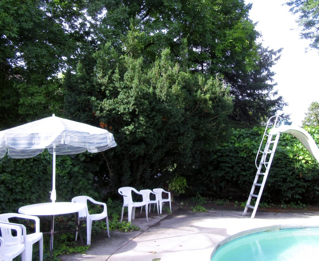 The tall Yew stands just beyond the deck chairs. To its right behind the slide ladder is one of the rows of Yews I must keep trimmed along with the grape vine that also reaches for the pool.