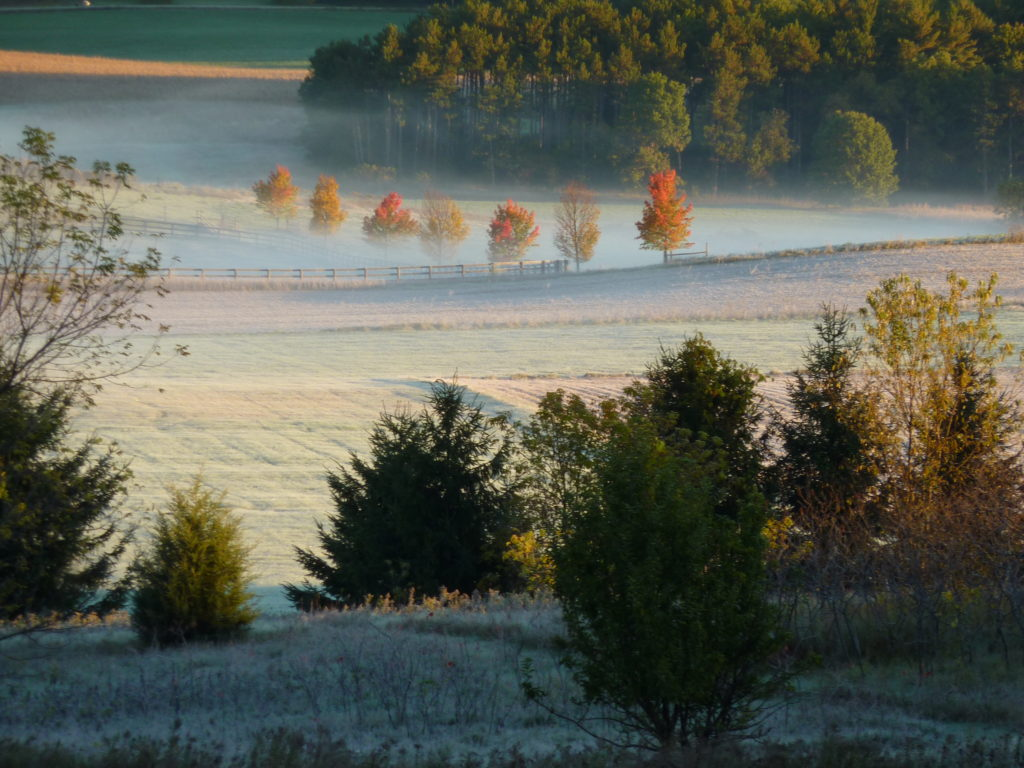 Early morning fog over the pasture in Central Wisconsin. Note the row of Maples (Acer rubrum) standing tall against the moist fall air. Photo by Sharon Lammers.