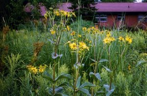 Donna and John's backyard prairie hosts many insects and a variety of other wildlife.