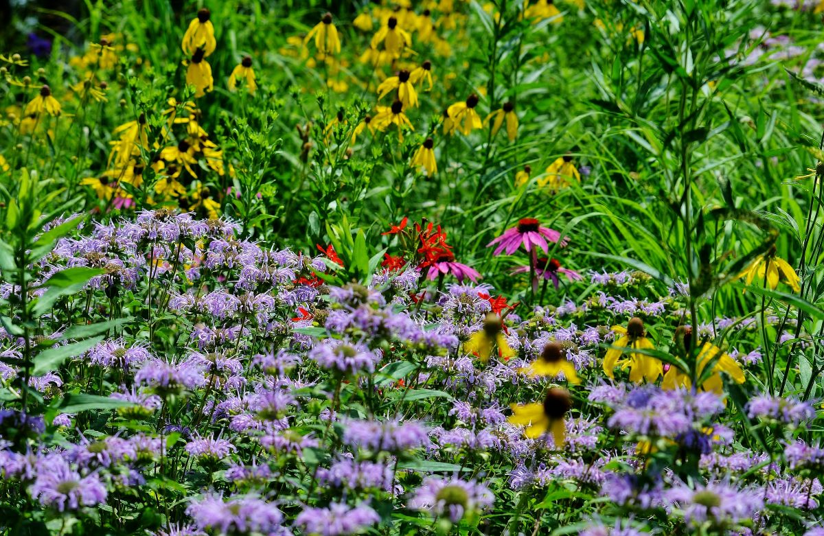Wisconsin Native Plant Nurseries | Accent on Natural ...
