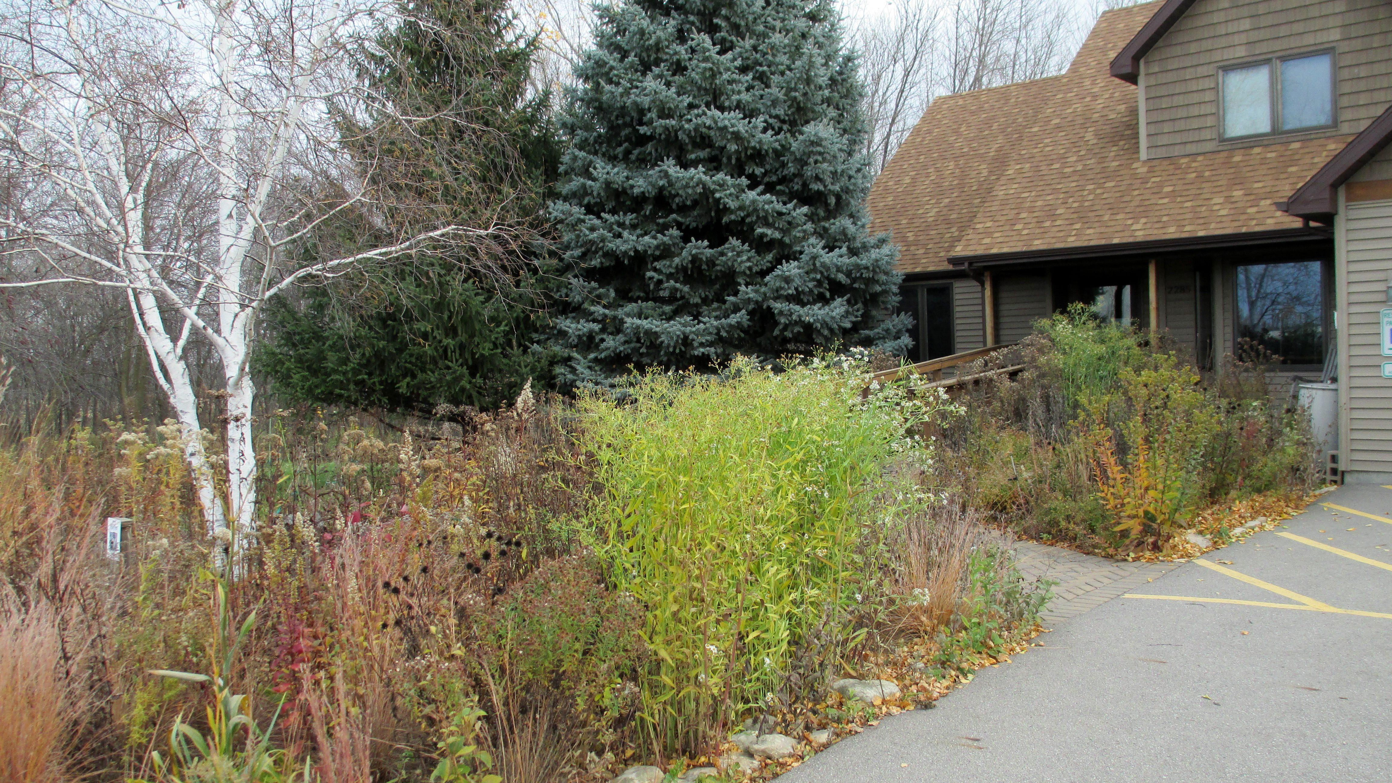 Fall Rain Garden At The Entrance To The WILD Center.