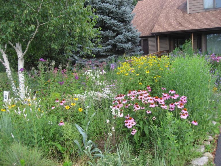 Summer view of the WILD Center frontyard.