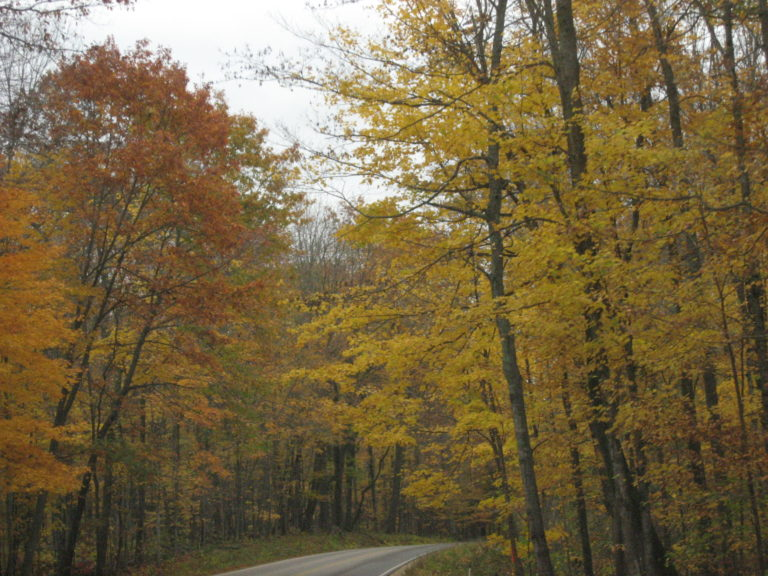 Like this road through this deciduous forest in East Central Wisconsin, may you be able to look ahead to what's around the bend. Happy Thanksgiving!